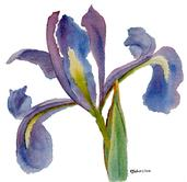 Watercolor painting of purple iris