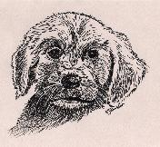 Puppy portrait in pen and ink on colored paper